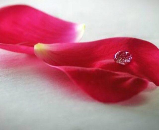 The Roses Petal